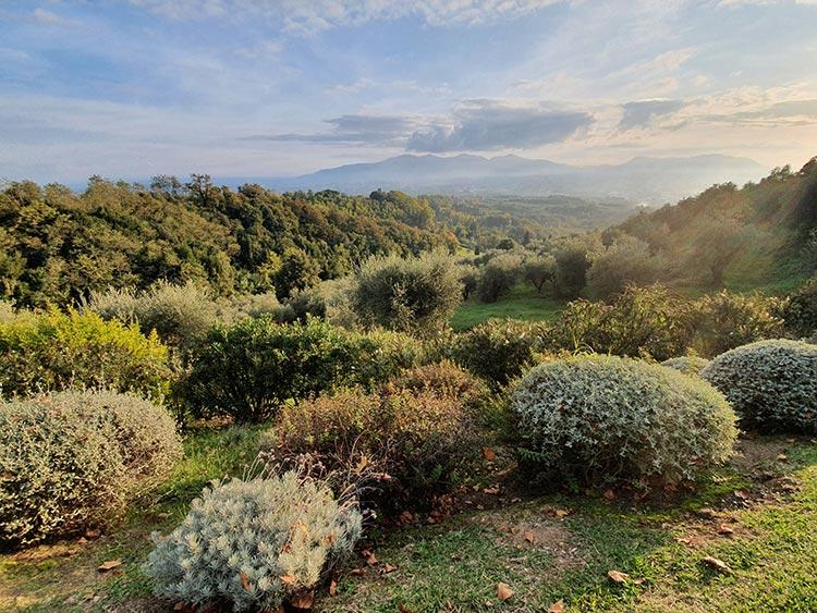 Fattoria Mansi Bernardini Italy Tuscany