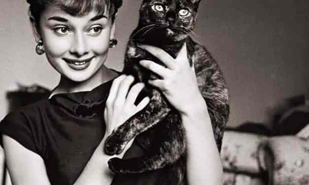 Chic and Sophisticated -How to Copy Audrey Hepburn's Style