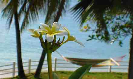 St. Vincent  – Why Buy In The Grenadines?