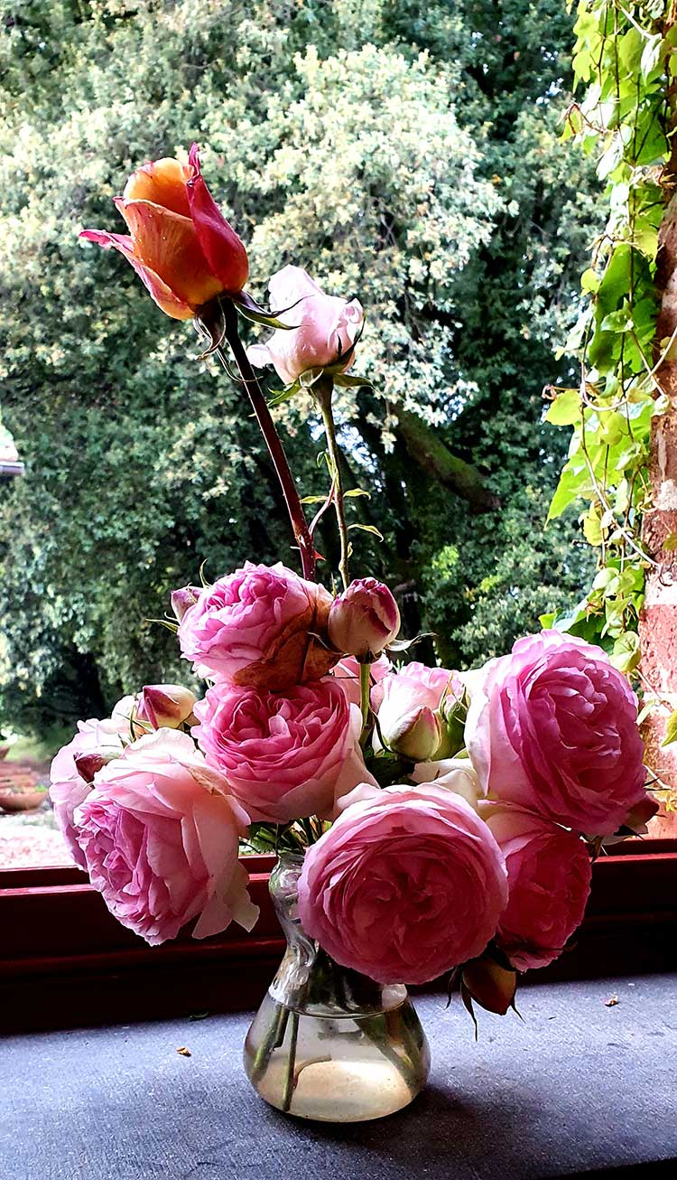 Illness - Dried Roses Gift Ideas