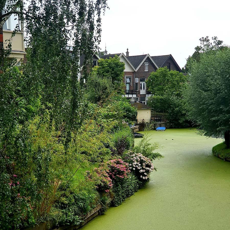 Moss Green canal Dordrecht