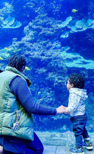 Weekend Adventures | The Georgia Aquarium
