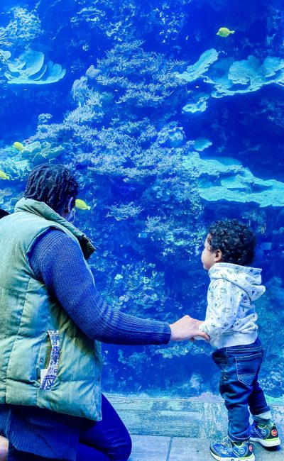 Weekend Adventures | The Georgia Aquarium