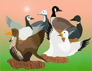 six-geese-a-laying