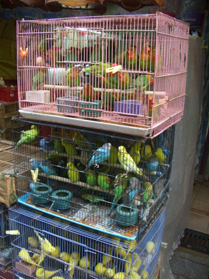 02_BirdMarket