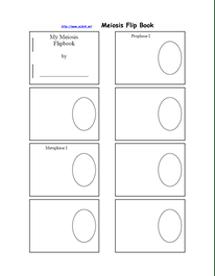 Mitosis Flipbook : mitosis, flipbook, Mitosis, Flipbook, Grade, Biology