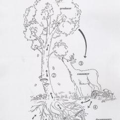Tree Diagram Worksheets Grade 4 Nissan Primera Wiring Science Trees And Forests Web Links