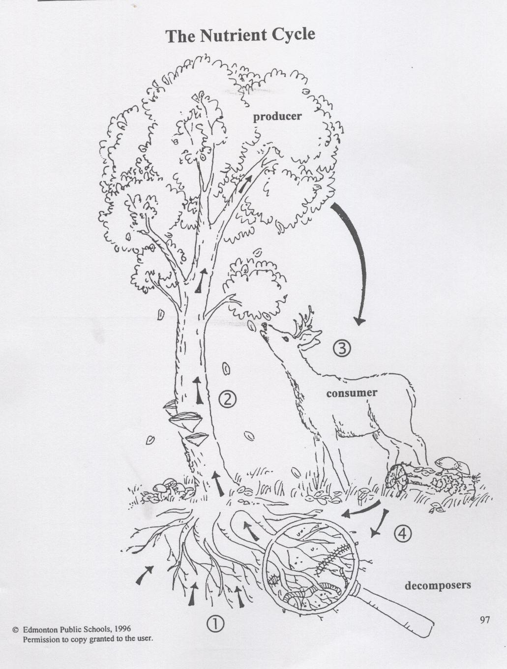 deciduous forest diagram electrical switch wiring diagrams science | trees & forests web links