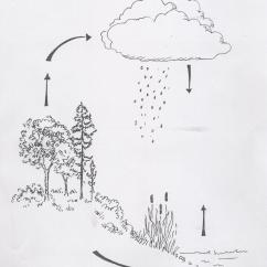 Water Cycle Diagram With Questions Spaghetti Six Sigma Science | Trees & Forests Web Links