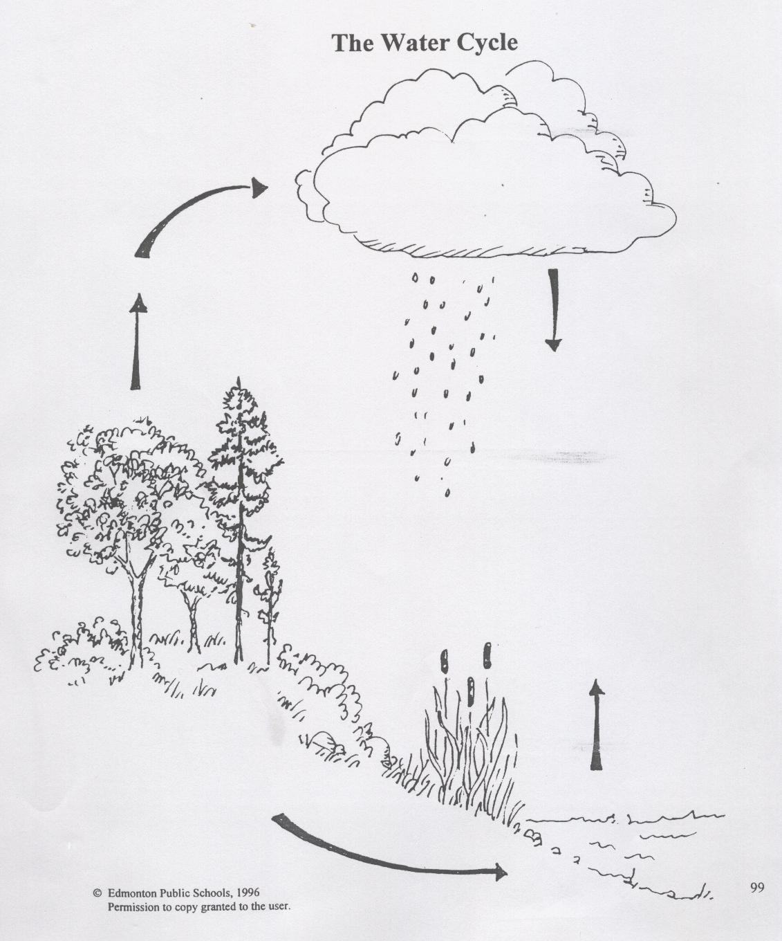 water cycle diagram with questions 1981 cb900 wiring science | trees & forests web links