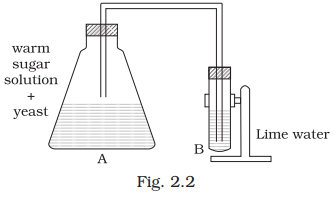 Observe the set up given in Fig.2.2 and answer the