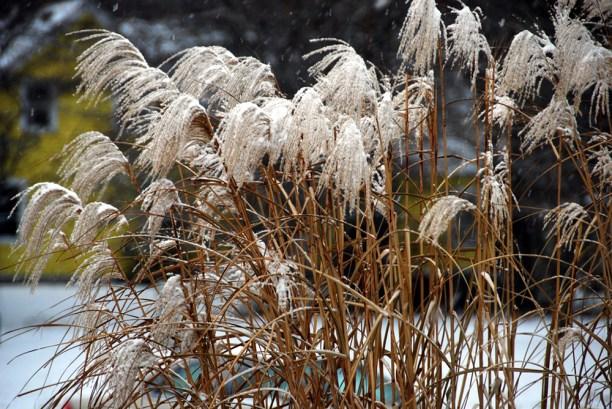 Ierburi decorative iarna