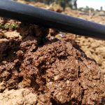drip-irrigation-in-kenya-6-1024×768