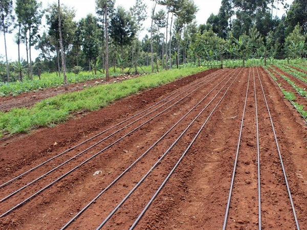 Drip Irrigation Kits and Components