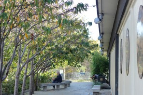 A man relaxing near the trees outside the Japan Center West Mall.