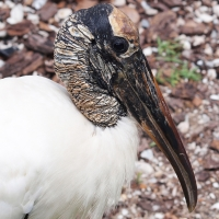 Stork profile Olympus - Nikon Imaging