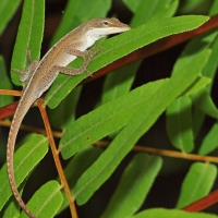 Lizard Olympus - Nikon Imaging