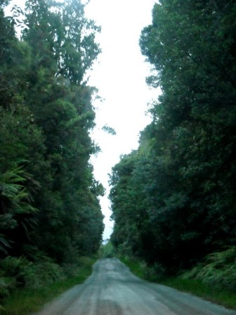 Bell Hill, gravel road and rainforest