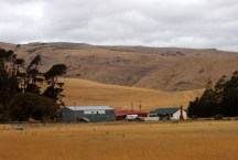 one of many sheep farms