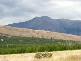 2015: was native grassland in 2006