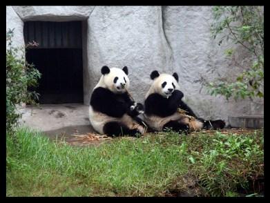 PERFECT PANDA TWIN SISTERS