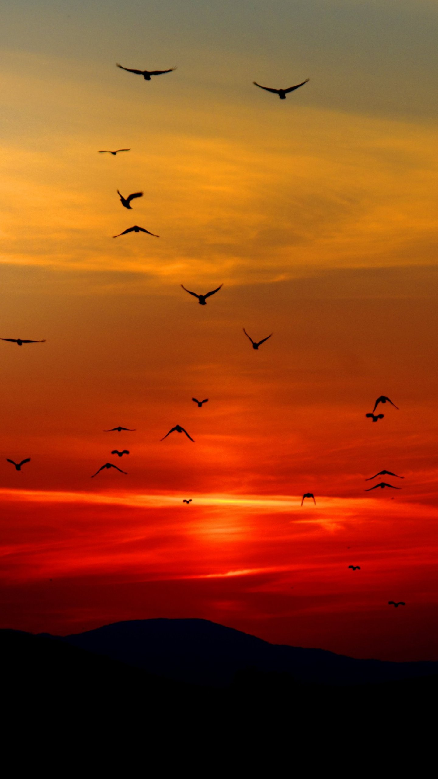birds in sunset wallpaper