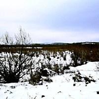 Pejzaż zimowy śnieg zima drzewa wzgórza
