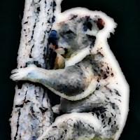 Śpiący miś koala na drzewie