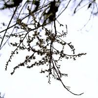 Suchy krzak trawa zima śnieg