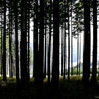 Ciemny mroczny las przedzierające się światło