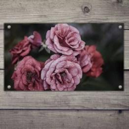 Tuinposter wet rosses