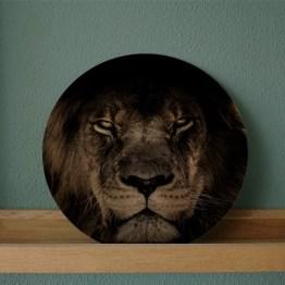 Muurcikel leeuw