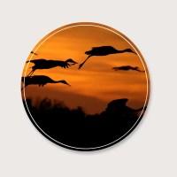 Muurcirkel vogels in de lucht