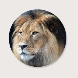 Leeuw tuincirkel