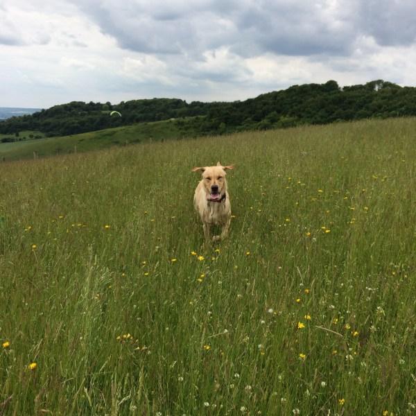 dog-running-through-field