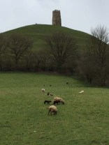 Grazing in Glastonbury