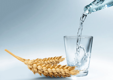 6 Barley Water Benefits You Probably Never Knew