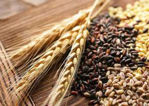Difference Between Barley, Malt and Grain