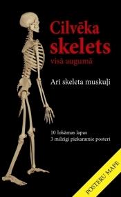Cilveka_skelets_original.jpg