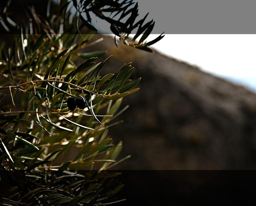 Granada Olives