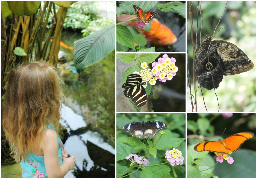 butterflyhouseCollage