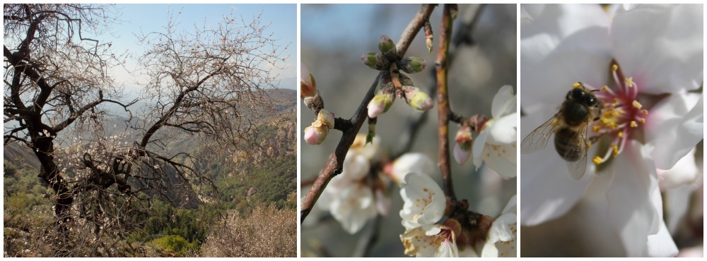 blossomCollage2