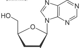 Kordycepina - składniki grzyba Cordyceps Sinensis