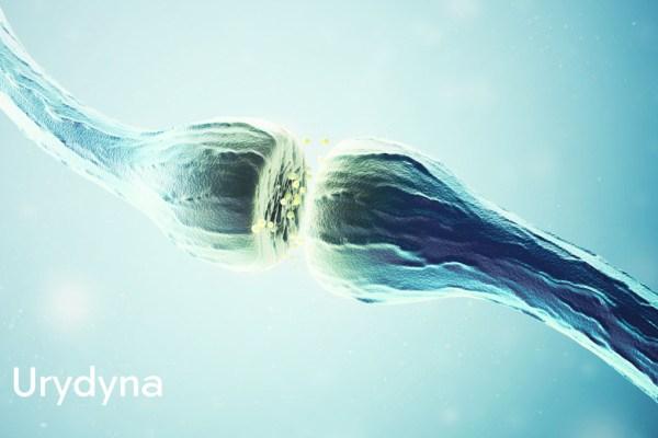 Połączenie synaptyczne - Działanie i właściwości urydyny