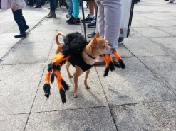 Spider dog, woof!