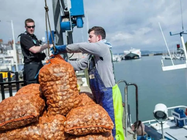 whelks being landed