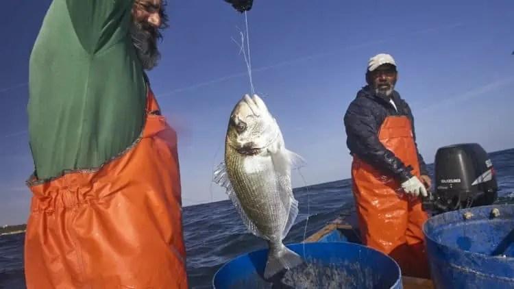 albufeira fishermen