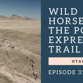 Episode 31: Wild Horses & Pony Express Trail | RV Utah boondocking travel