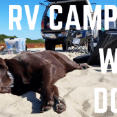 Episode 86: RV Camping with Dogs | RV travel tips tricks how-to