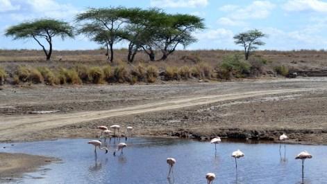 002 Tanzanie